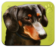 Dachshund_Dog Mouse Pad colors green